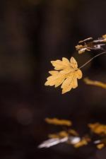 Galhos, folhas amarelas, fundo escuro