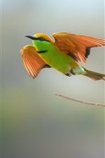 Two birds, bee-eater