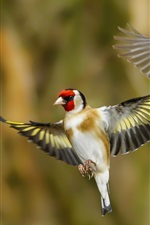 Preview iPhone wallpaper Two birds flying, goldfinch, wings