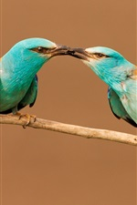 Two birds share food, beak, insect