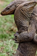 Preview iPhone wallpaper Two lizards hugs
