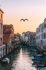 Preview iPhone wallpaper Venice, Italy, canal, houses, flying bird