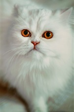 Preview iPhone wallpaper White cat look up, red eyes