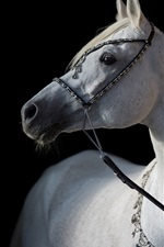 Preview iPhone wallpaper White horse, black background