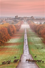 Preview iPhone wallpaper Windsor Castle, England, autumn, trees, road, deer, fog