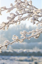 Inverno, galhos, neve