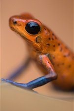 Preview iPhone wallpaper Amphibian, frog macro photography