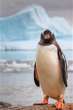 Preview iPhone wallpaper Antarctica, penguin, iceberg