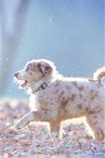 Preview iPhone wallpaper Australian shepherd walk in the forest, snow