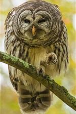 Autumn, owl on tree, bokeh