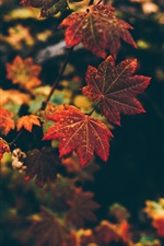 Preview iPhone wallpaper Autumn, red leaves, bokeh