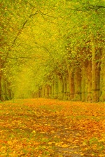 Preview iPhone wallpaper Autumn, trees, leaves, alley