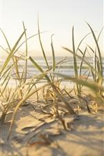 Beach, grass, sea