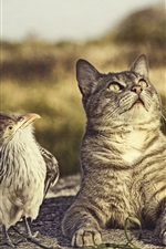 Bird and cat look up