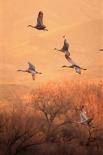 Birds flight, morning