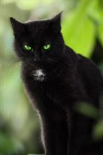 Preview iPhone wallpaper Black cat, green eyes