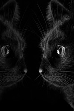 Preview iPhone wallpaper Black cat look at mirror, black background