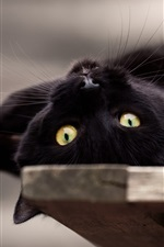 Preview iPhone wallpaper Black cat playful, yellow eyes