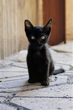 Preview iPhone wallpaper Black kitten sit down, look, ground