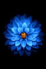Blue flower close-up, black background