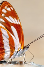 Preview iPhone wallpaper Butterfly macro photography, orange wings