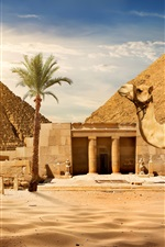Preview iPhone wallpaper Cairo, pyramid, camel, sands, palm tree, sun, Egypt