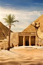 Cairo, pirâmide, camelo, areias, palmeiras, sol, Egito