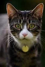 Cat front view, yellow eyes, bokeh