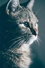 iPhone fondos de pantalla Vista lateral de gato, peludo