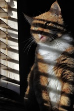 Preview iPhone wallpaper Cat sit at windowsill, blinds