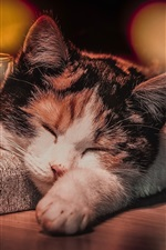 Preview iPhone wallpaper Cat sleep, glass cup