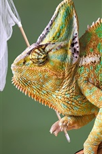 Preview iPhone wallpaper Chameleon hunting butterfly, funny animals