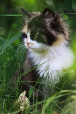 Preview iPhone wallpaper Cute cat in the grass, furry pet