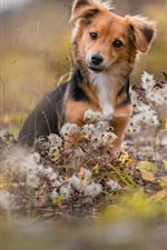 Preview iPhone wallpaper Cute dog, wildflowers