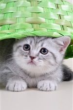 Preview iPhone wallpaper Cute kitten, basket, grape, funny animals