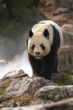 Preview iPhone wallpaper Cute panda walk, rocks