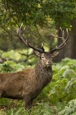 Preview iPhone wallpaper Deer, fern, trees