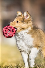 Preview iPhone wallpaper Dog catch a ball