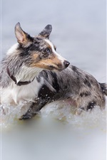 Preview iPhone wallpaper Dog stand in water, look back