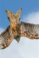 Preview iPhone wallpaper Eagle hunting, flight, wings, clouds, sky, from bottom view