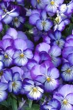 iPhone壁紙のプレビュー 花、花びら、パンジー