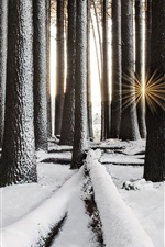 Preview iPhone wallpaper Forest, trees, snow, winter, sun rays