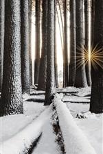 iPhone fondos de pantalla Bosque, árboles, nieve, invierno, rayos del sol