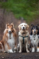 Four dogs, road