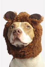 Preview iPhone wallpaper Funny animals, dog, hat