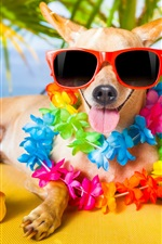 Funny dog, sunglasses, flowers, toy duck, humor