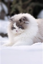 Preview iPhone wallpaper Furry cat play snow