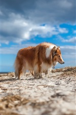 Preview iPhone wallpaper Furry dog, clouds, sky