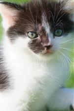 Preview iPhone wallpaper Furry kitten, grass, bokeh