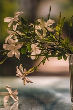 Glass cup, flowers, reflection